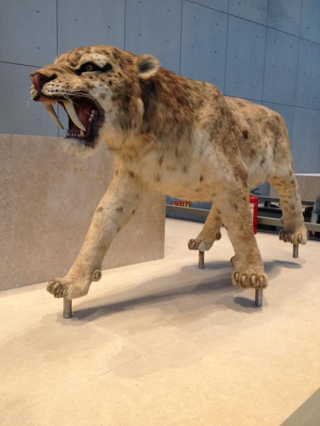 广州仿真动物-豹-博物馆雕塑制作